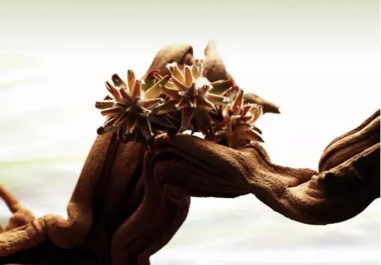 根雕:根的艺术