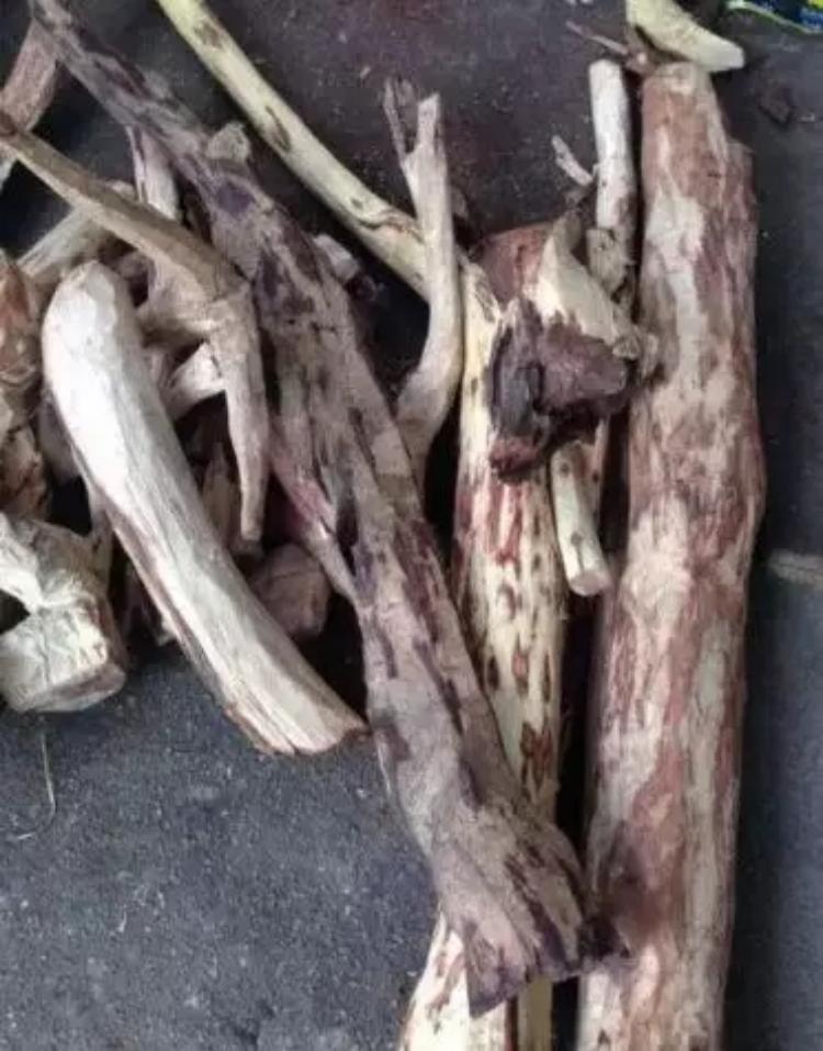 海南黄花梨入门:老料、新料、干料、人工林
