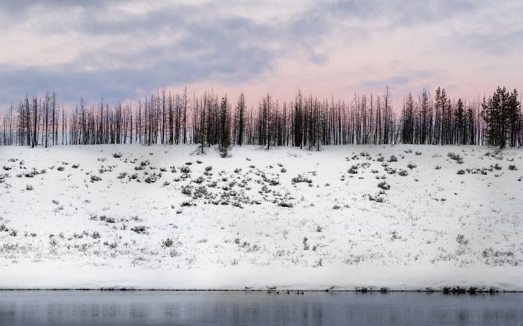 寒冷冬日雪景唯美