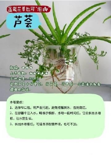 """【这些水""""做""""的植物,最好养!】有的植物跟人一样,爱喝水、爱泡澡,养它们的时候,只要拿捏好分寸,就能让它们能茁壮生长!看看这些娇艳欲滴的花儿,想不想你的小屋里养上一两株呢?"""