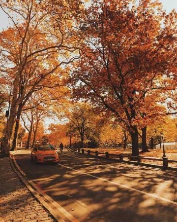 秋天的纽约才是最美的。 