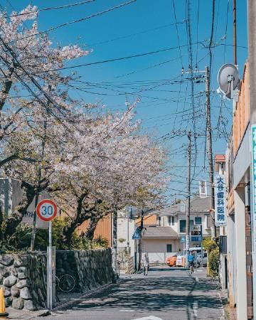 春日镰仓的万里晴空