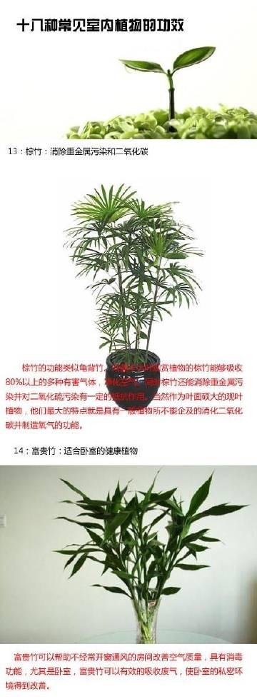 十八种常见室内植物的功效,给自己的家挑选一款合适的植物!