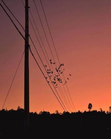 暮色中的电线杆