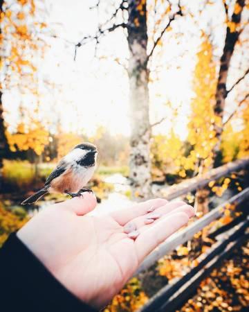 芬兰的秋🍁